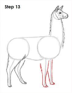 Llama Drawing 13 Llamas Animal, Llama Drawing, Alpacas, Llama Arts, Cute Animal Drawings, Elementary Art, Pattern Art, Easy Drawings, Art Tutorials