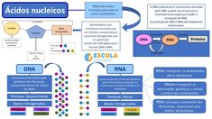 O Que E Dna, Dna E Rna, Base Nitrogenada, Mental Map, Chemistry Classroom, Study Hard, Science, Study Tips, Medicine