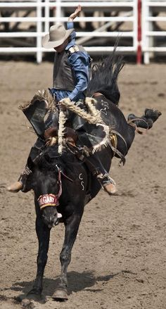 Soo pumped for the Calgary Stampede! Cowboy Horse, Cowboy And Cowgirl, Cowboy Art, Rodeo Events, Rodeo Time, Rodeo Cowboys, Western Riding, Bull Riders, Canada