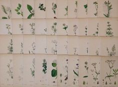 40 x Antique 19th c Hand Coloured Sowerby Botanical Engravings - A39