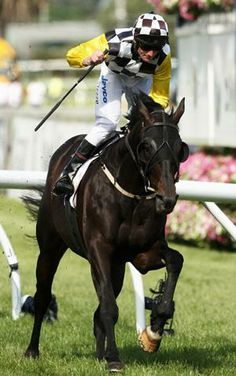 ... racehorse who won the 148th Melbourne Cup on 4 November 2008