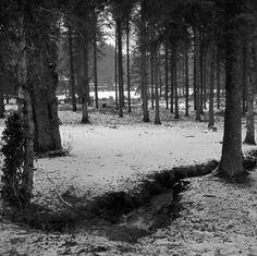 "nicholas szczepanik - ""entre los árboles"" (ambient, drone, experimental, sound art)"