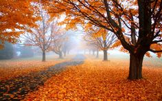 nature, Landscape, Morning, Mist, Fall, Road, Trees, Orange, Leaves, Path, Daylight HD Wallpaper Desktop Background
