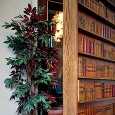 Discover the secret bar behind a bookcase at The Lost and Found, Birmingham.