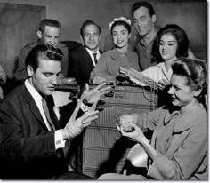 Elvis, a knitters friend