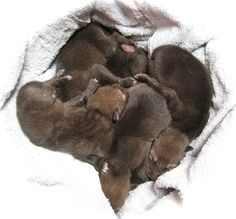 Baby red wolves ;0 Baby Wolves, Red Wolves, Kayak Fishing, Saltwater Fishing, Deer Hunting Blinds, Wolf Pup, Wolf Spirit, Bull Riding, Lovely Creatures