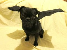 pet costume bat costume black wings dog cat by PerfectPartys, $18.00