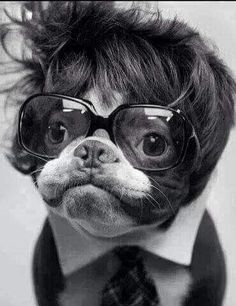 Dog Orbison