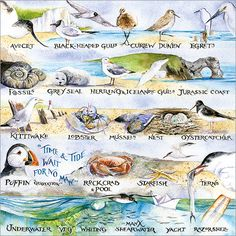 """""""Time and Tide Wait for No Man"""" is just one of the details on this intricate illustration by Val Goldfinch. Beautiful greeting card depicting the British coastline and the wildlife found on it. Time And Tide, Jurassic Coast, Alphabet Cards, Send A Card, Goldfinch, All Print, Flamingo, Wildlife, Greeting Cards"""