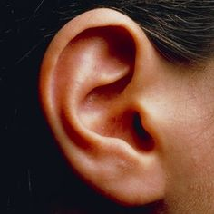 ear 'link to hyperactivity ' Inner Ear Disorders Linked to Hyperactivity- causes difference in behavior such as ADHD and in speech Human Reference, Anatomy Reference, Photo Reference, Ear Anatomy, Human Anatomy, Human Ear, Human Body, Human Human, Inner Ear Disorders