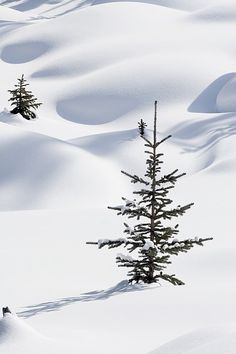 beauty of untouched snow...