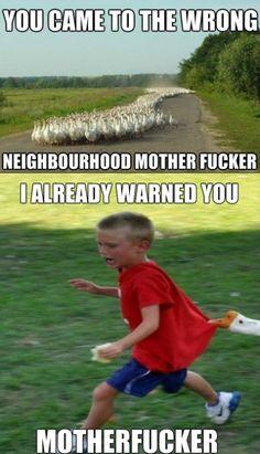 Geese In The Neighborhood