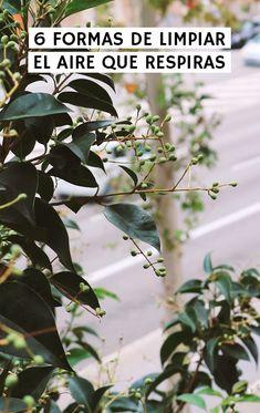 Plantas purificadoras, ventilar, un purificador de aire, cambiar a productos de limpieza naturales, apoyar a ONG's, votar a partidos ambientalistas... Limpieza Natural, Plant Leaves, Shapes, Tutorials, Products, Plants, Life