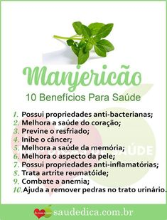 Manjericão Healthy Tips, Healthy Recipes, Healthy Mind And Body, Healthy Fruits, Ceviche, Cooking Tips, Natural Remedies, Herbalism, Detox