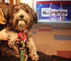 What a cutie. Hewbert was our Pet of the Week on Jan. 20. He's a Terrier mix and quite a cuddler.  Contact the Seattle Humane Society if you would like to give him a loving home.