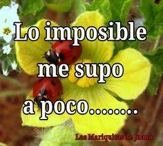 Tu eres imposible...