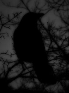 ☾ Midnight Dreams ☽  dreamy & dramatic black and white photography - Dark Raven