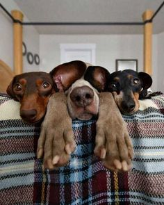nice Dog Memes That Are Too Freaking Hilarious Pictures) - Hunde und Katzen Cute Puppies, Cute Dogs, Dogs And Puppies, Doggies, Dachshunds, Baby Dogs, Cute Funny Animals, Funny Dogs, Humorous Animals