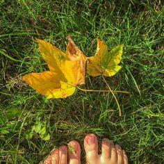 Korzystam z ostatnich (?) słonecznych dni przed szarą jesienią i cieszę się z kolorów natury.  Jeszcze jest na tyle ciepło że można wychodzić do ogrodu na bosaka co uwielbiam.  Tymczasem na blogu czeka nowy wpis o ludziach wysokowrażliwych którzy odbierają świat intensywnie wszystkimi zmysłami.  Link w bio!    #autumn #jesien #jesień #leaf #liść #liście #autumnleafs #summerend #barefoot #senses #sensitive #blog #blogpost #highlysensitivepeople #hsp #wysokowrazliwi #wysokowrażliwi #wrażliwość…