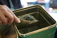 Best Places to Buy Exotic Teas in Toronto