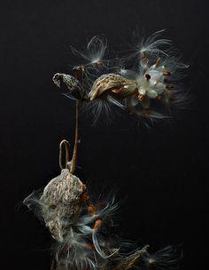wind.pod.magic