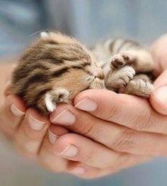 Sleeping baby kitten Siamese tabby kitty Funny cute cats
