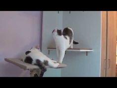 Klettergerüst Für Katzen Selber Bauen : Besten katzen bilder auf hund katze haustiere und
