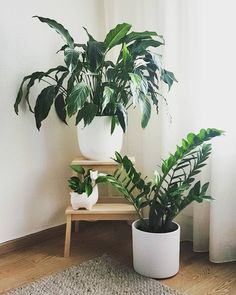 Have a happy Monday evening everyone! * Have a great Monday evening everyone! Decor, House Plants, Home Decor Inspiration, Plant Aesthetic, Interior Plants, Spring Decor, Plant Decor Indoor, Bedroom Decor, Plant Decor