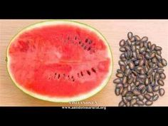 Hierve la semillas de sandía y luego tomarlo los resultados te dejarán con la boca habierta - YouTube