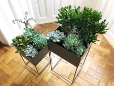 industrial planter - black metal - in combination with succulents - simple and elegant.