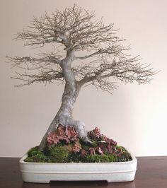 ᴥ♥Your #bonsai inspiration for today!֍☼       #BonsaiInspiration