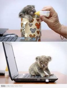"koala  "" Well dat makes no sense. Six weeks old, ya bottle feed me, den I'm supposed teh help yoo wif yer school work ? """
