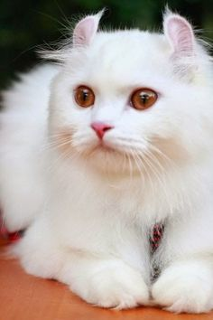 "The 10 Most Unique Looking Cat Breeds - Thanks to my ""Pindred Spirit"" Ashaley Lenora for sending me this beauty!"