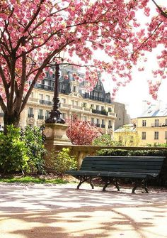 Pink blossoms in Paris during springtime.