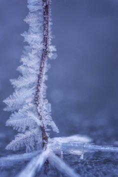 Abstract Photograph - Crystal Fern by Marnie Patchett