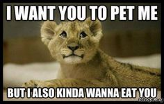 I want you to pet me… (This is what Catelyn says to me every day!)