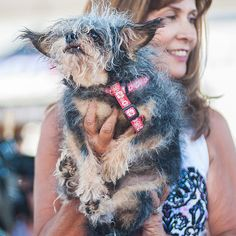 Scamp | 16 Of The Cutest Dogs At The World's Ugliest Dog Contest