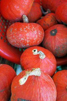 Photo by Emily Ryan Some people mistake this particular type of kabocha squash for a pumpkin.