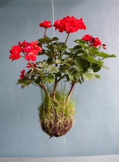Hanging String Garden: Grow plants in balls of soil/moss tied together with string and hang them! (Dunk in water to refresh.)