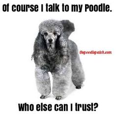 OF COURSE I TALK TO MY POODLE WHO ELSE CAN I TRUST???
