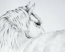 "Dappled White Horse Drawing 8""x10"" Giclee Print- Charcoal and Graphite drawing,  Horse art"