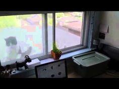 Window cat attack