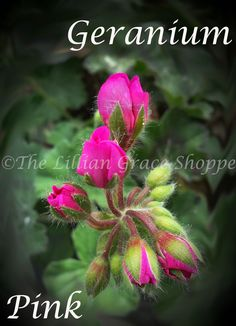From The Garden Series - Pink Geranium - Instant Download - JPG by LillianGraceShoppe on Etsy