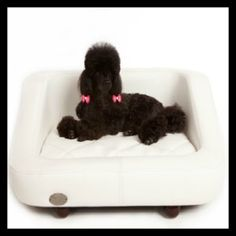 Chester & Wells Richmond dog bed is now on sale. See the range of stylish dog beds from Chester & Wells online now! Designer Dog Beds, Orthopedic Dog Bed, Cat Accessories, Comfy Bed, Pet Beds, Large Dogs, Doge, Chester, Wells
