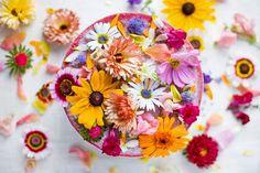 Flores comestíveis                                                                                                                                                                                 Mais