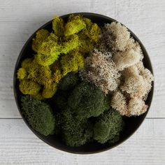 A long-lasting accent for potted plantings and terrariums, this preserved reindeer moss is hand-dyed in an array of saturated hues. - Preserved and dyed reindeer moss - Indoor use only - Dyed natural specimen, variance in color will occur - USA 2 oz. Garden Accessories, Home Gifts, Preserves, Accent Decor, Outdoor Gardens, Reindeer, Terrariums, Flowers, Plants