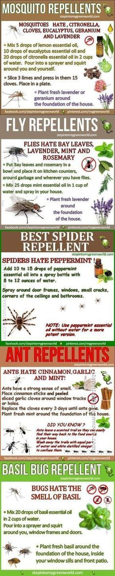 Pest Control Houston 5 Best Homemade Mosquito and Insect Repellent insects camping diy diy ideas easy diy bugs tips life hacks all natural camping hacks good to know repellent repellents Camping Diy, Camping Hacks, Tent Camping, Family Camping, Camping Ideas, Camping Essentials, Outdoor Camping, Camping Kitchen, Camping Guide