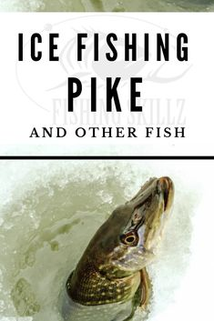 Here's the best article loaded with ice fishing tips and techniques for beginners who want to ice fish for pike. It also includes tips for ice fishing crappie, bluegill and bass. #icefishing #fishing #pike #winterfishing #fishingskillz