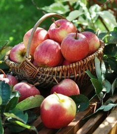 Apple Farm, Apple Orchard, Fruit And Veg, Fruits And Vegetables, Fruits Photos, Fruit Picture, Apple Harvest, Fruit Photography, Apple Tree