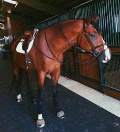 -` pinterest : Noa Meirsman ´- #Beautifulhorsesaddles